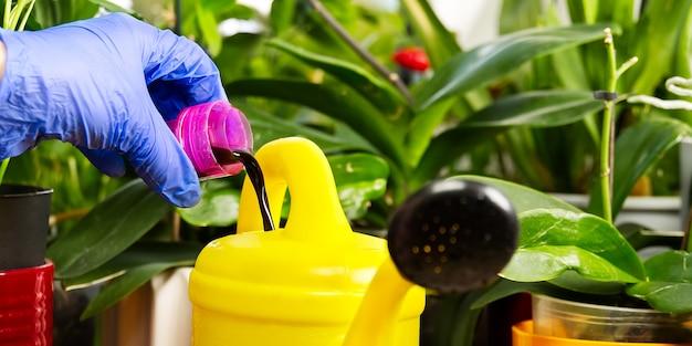 特別な液体でそれらに水をまく植物の世話をする