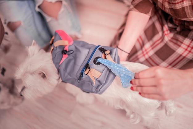 小さな鞄を取ります。ペット用の特別な服から小さなバッグを取り出している白い犬を所有している女性の上面図