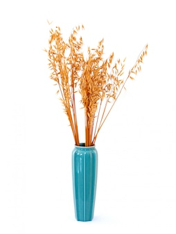 Tall blue vase with dried wheat flower isolated.