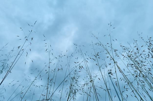 복사 공간이 있는 배경의 키 큰 잔디와 하늘