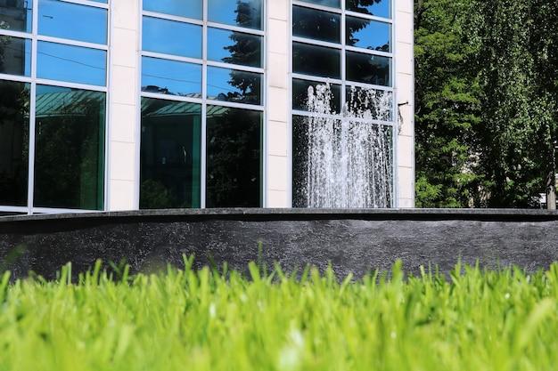 Высокая трава перед зданием