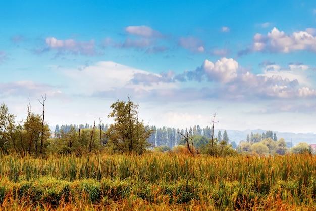 天気の良い秋の牧草地の背の高い草。背の高い草、木々、色とりどりの雲と空と秋の風景。