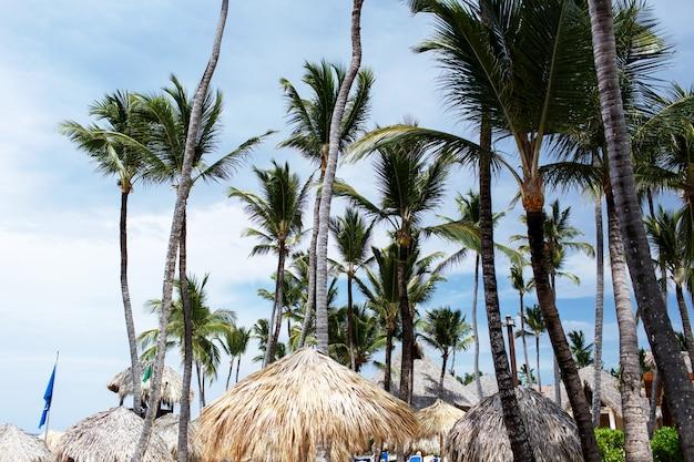 키 큰 녹색 손바닥 해변에서 푸른 여름 하늘에 상승