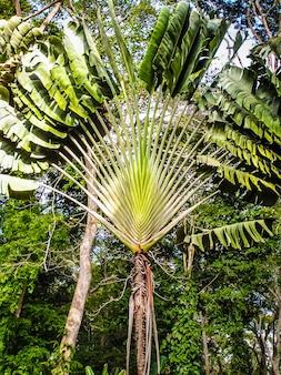 푸른 하늘을 배경으로 한 키 큰 야자수. 카리브 해안. 열대 식물. 섬의 휴일.