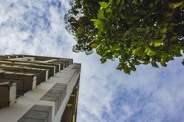 木の横にある高層ビルの超高層ビル