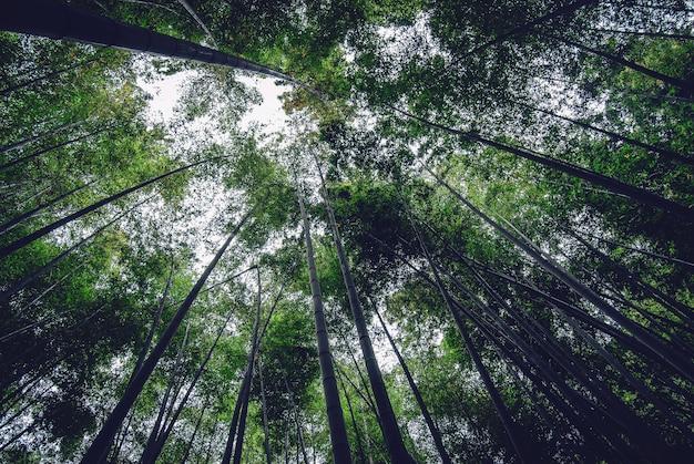숲 한가운데에 키 큰 얇은 아름다운 나무