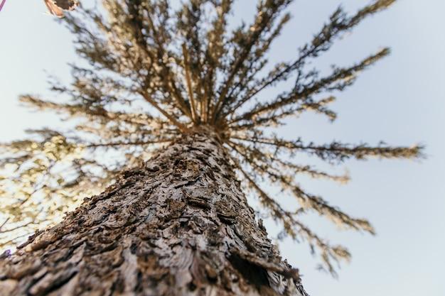 日光の下で森の中の背の高い木