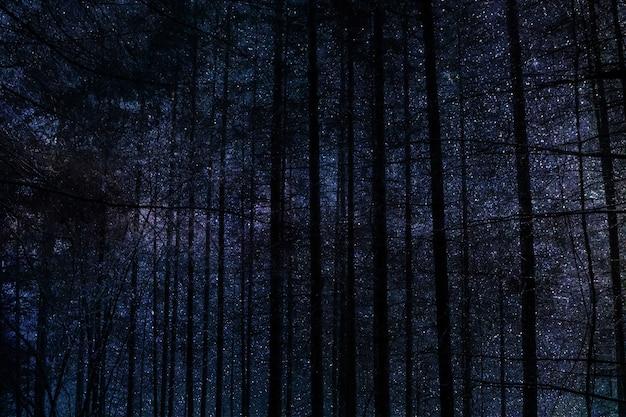 하늘에 대 한 밤에 키 큰 나무