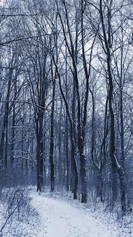 Высокие деревья в заснеженном зимнем лесу, заснеженная дорога в лесу