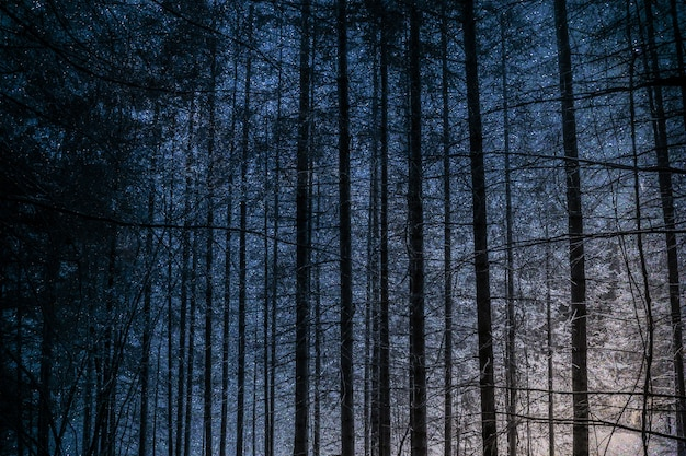 Tall trees at night against sky