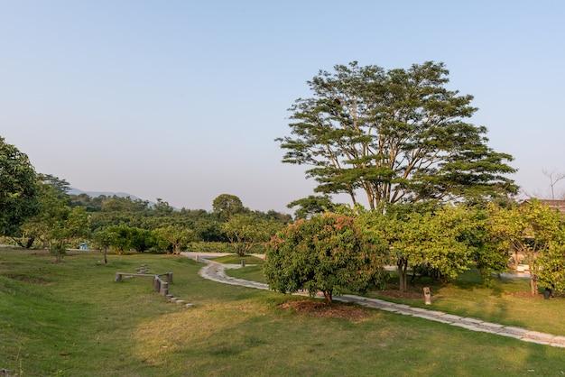 公園の奇妙な外観の背の高い木