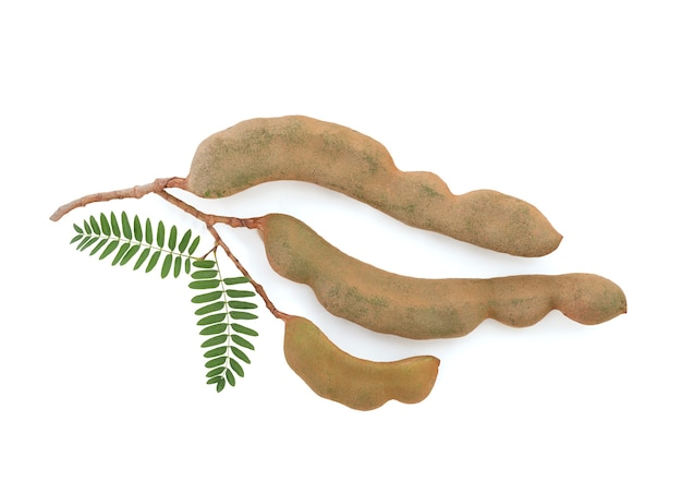 클리핑 패스와 함께 흰색 배경에 분리된 타마린드 과일과 녹색 잎은 평평한 위치에 있습니다.