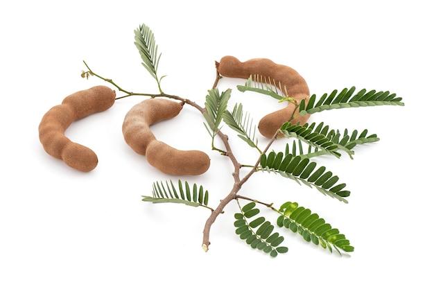 タマリンドの果実と緑の葉が白で隔離。