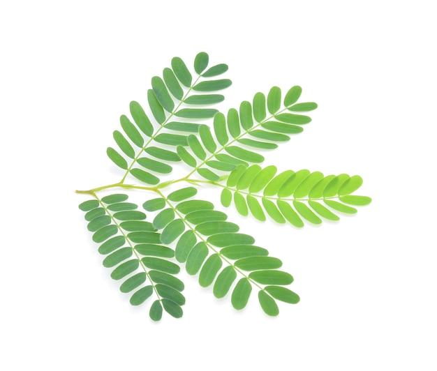 白い背景で隔離のタマリンドの葉