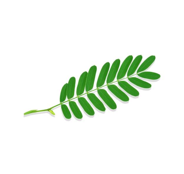 分離されたタマリンドの葉