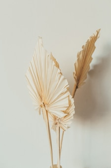흰색 표면에 탄 팬 공예 잎