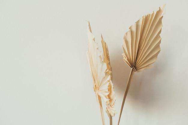 Tan fan craft leaves on white Premium Photo