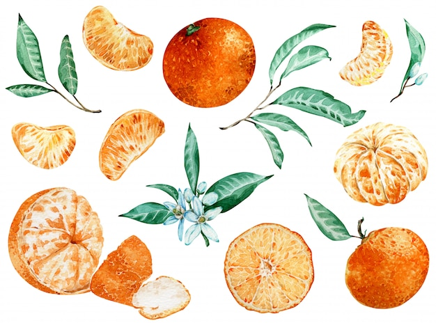 Tangerine clipart isolated on white