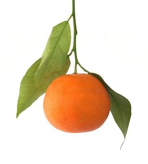 Tangerine fruit isolated
