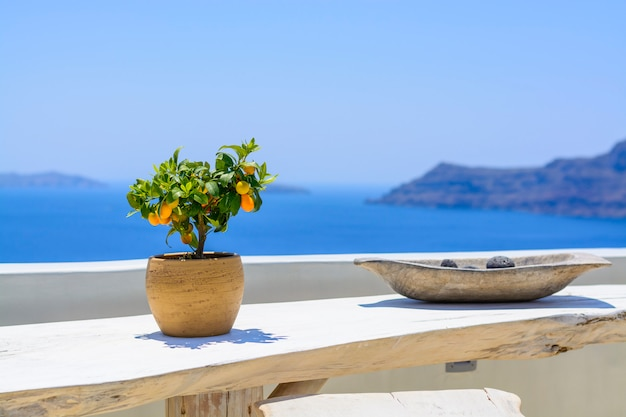 Tangerine tree in old clay pot, on blue sea. lemon tree on white wooden table