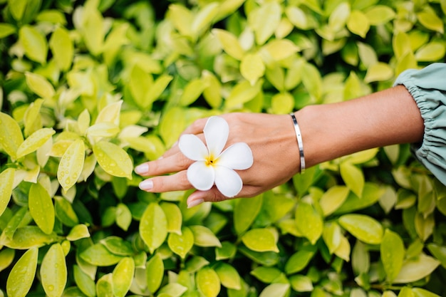 Tanned hand with natural manicure with jewerly cute silver bracelet holds white thai flower plumeria