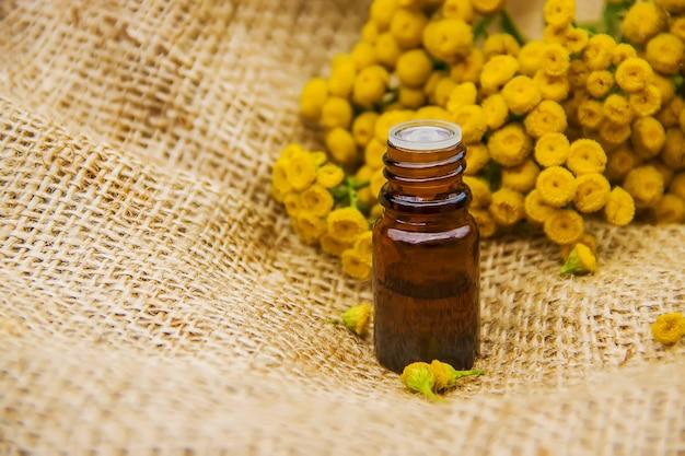 Tansy medicinal extract nature