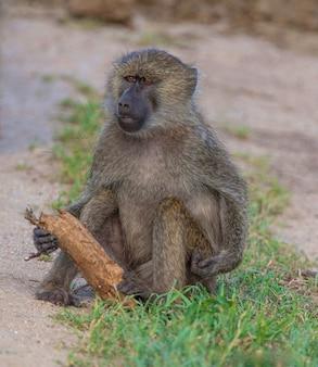 タランギーレ国立公園