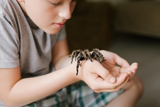 Паук тарантул в террариум на окне дома.
