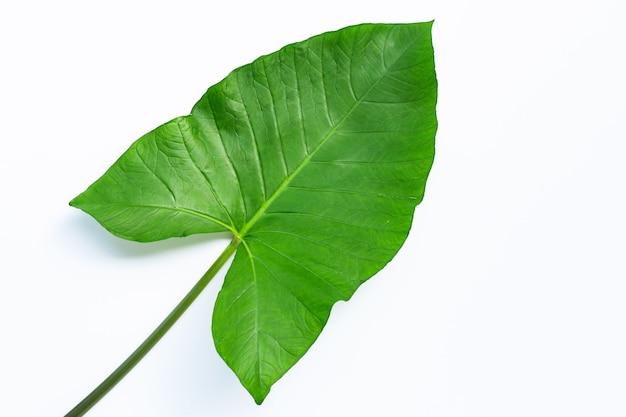 Лист таро изолирован.