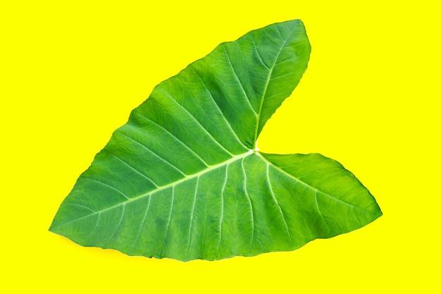 黄色い表面に里芋の葉