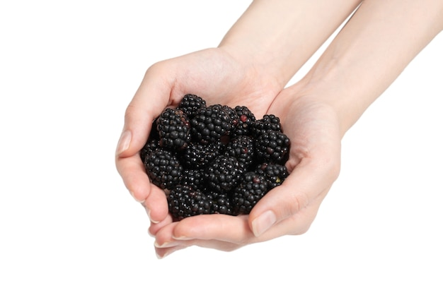 Tasty blackberry kept in hands isolated on white background. top view.
