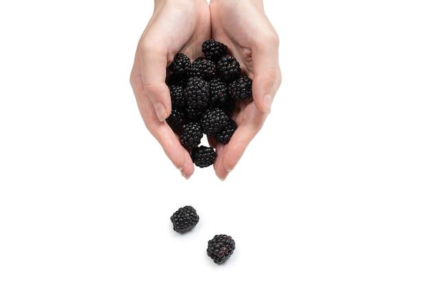おいしいブラックベリーは、白い背景で隔離の手で保持されます。上面図。