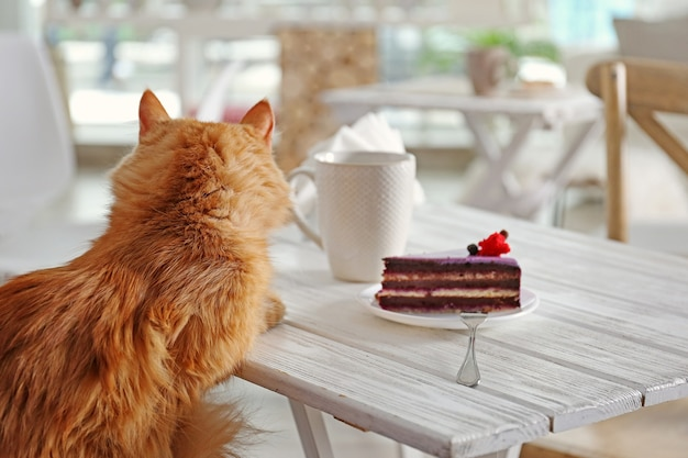 Tasty dessert and cup of coffee on table in cat cafe