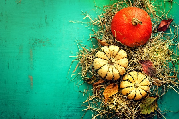 Tasty orange pumpkins on hay autumn leaves on beautiful turquoise background top view