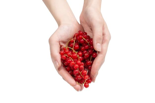 Вкусная красная смородина в руке женщины, изолированные на белом фоне. вид сверху.