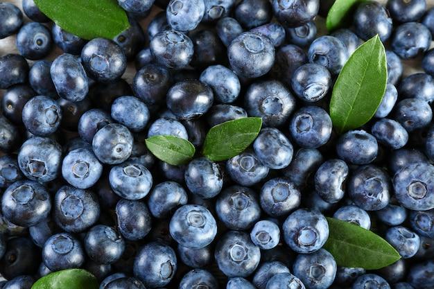 녹색 잎을 가진 맛있는 익은 블루 베리를 닫습니다.