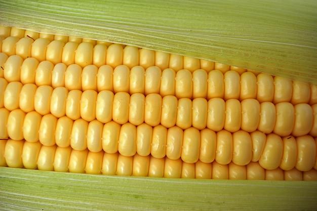 Tasty ripe corn