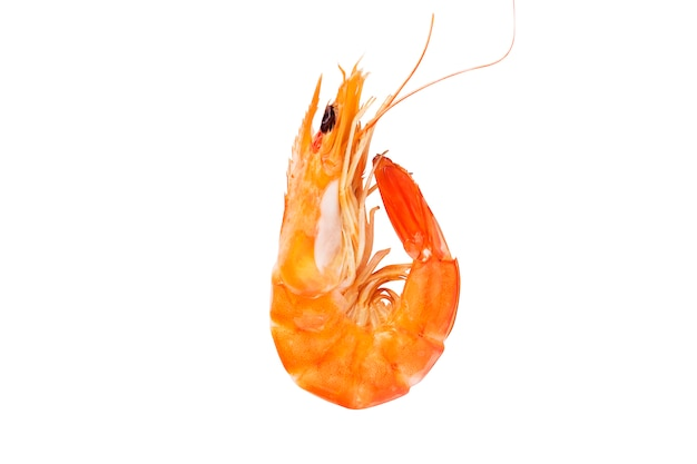 Tasty shrimp on white background
