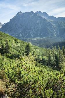 Взгляд высоких гор tatra от тропы.