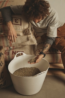 Tattooed barista checks raw green coffee beans from white plastic basket, sitting on cotton bags in warehouse.