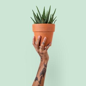 Mano tatuata che tiene una pianta succulenta in vaso