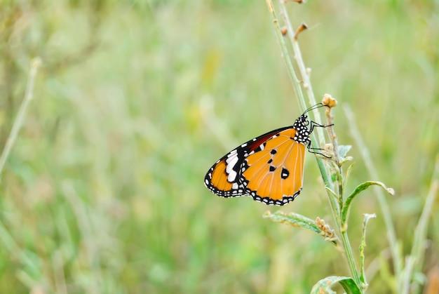 Бабочка тони костер