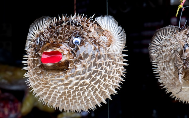 Taxidermic balloon fish for sale.