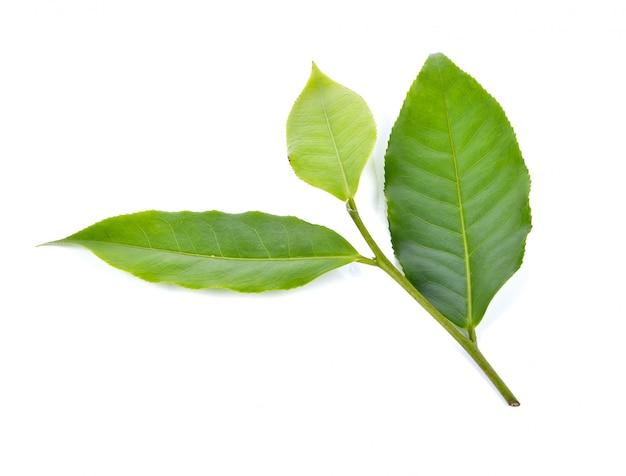 白い背景の上の茶葉