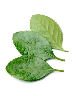 Крупный план листьев чая.