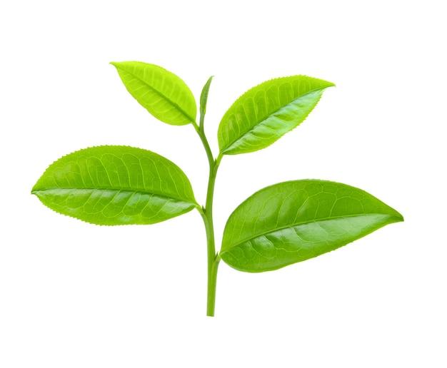 白で隔離茶葉