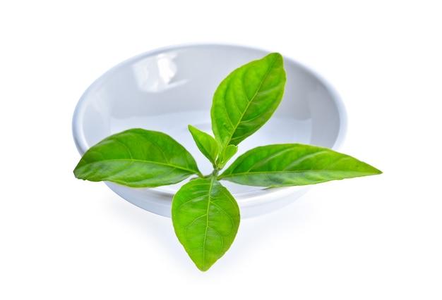 Чайные листья на белом фоне