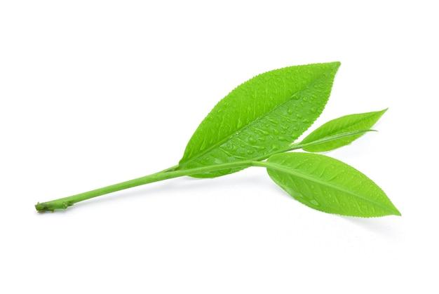 Чайные листья с каплей воды, изолированные на белом фоне