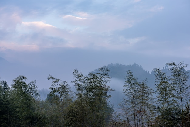 Tea mountain and forest in morning fog