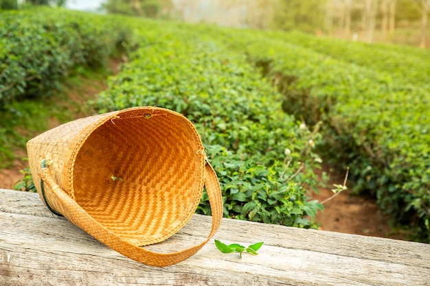 Tea picker bag on wooden table with fresh leaf on the bushes in tea plantations.